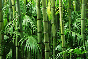 Bamboo plants, Natural Supplements, Dr. Sears, My Pure Radiance, All Natural Beauty